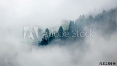 Fototapeta Mgła przysłaniająca las (123255146)