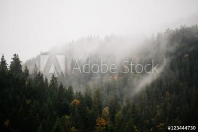 Fototapeta Las z mgłą nad górami ( 123444730)
