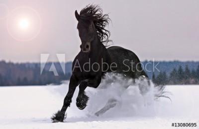 Fototapeta Galopujący w śniegu koń(13080695)