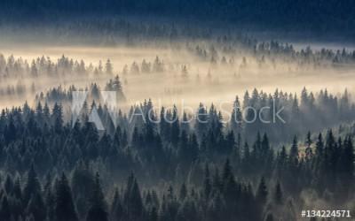 Fototapeta Mgła w lesie iglastym w górach (134224571)