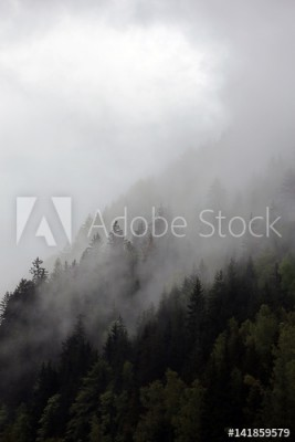 Fototapeta Mgliste chmury nad ciemnym alpejskim lasem górskim ( 141859579)
