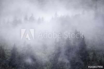 Fototapeta Świerki we mgle, Alaska (143417956)