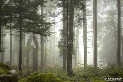Fototapeta Uroczy krajobraz z zamglonym lasem