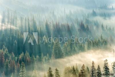 Fototapeta Las pokryty mgłą (164908166)