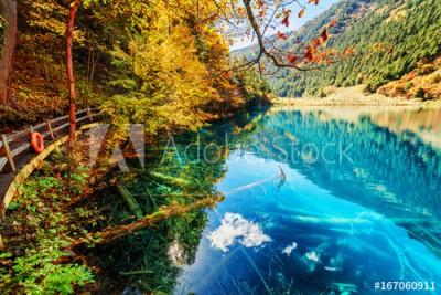Fototapeta Fantastyczny widok jeziora w lesie (167060911)
