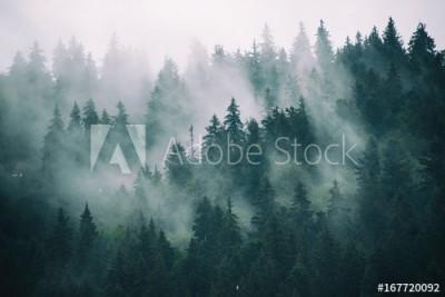 Fototapeta Mgła w jodłowym lesie w stylu retro vintage hipster (167720092)