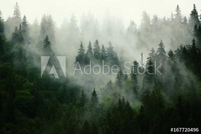 Fototapeta Mglisty krajobraz z jodłowym lasek w stylu retro vintage hipster (167720496)