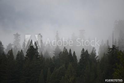 Fototapeta Drzewa we mgle (169070785)