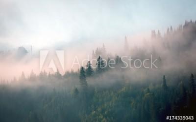 Fototapeta Poranna mgła w górskim lesie (174339043)