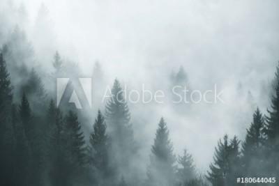 Fototapeta Las pokryty mgłą (180644045)