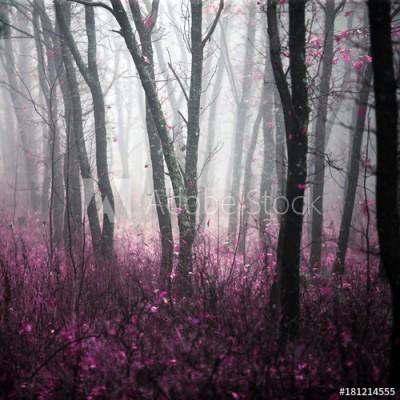 Fototapeta Magiczny dziki las w porannej gęstej mgle (181214555)