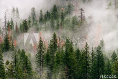 Fototapeta Las we mgle, Yosemite