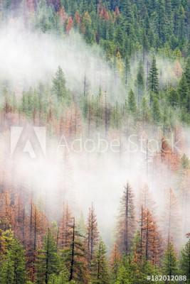 Fototapeta Las w Parku Narodowym Yosemite (182012088)