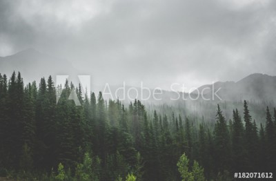 Fototapeta Starożytny las (182071612)