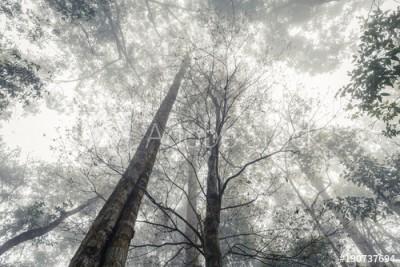 Fototapeta Dżungla we mgle (190737694)