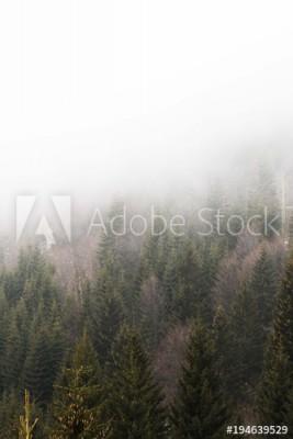 Fototapeta Mglisty krajobraz drzew (194639529)
