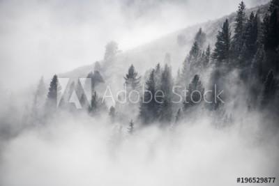Fototapeta Drzewa wynurzające się z mgły (196529877)