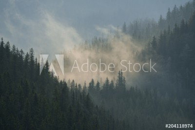 Fototapeta Las z mgłą w koronach drzew (204118974)