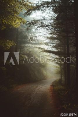 Fototapeta Tajemnicza zamglona droga w lesie (208415174)