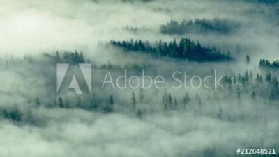 Fototapeta Mgła pokrywa drzewa (212648521)