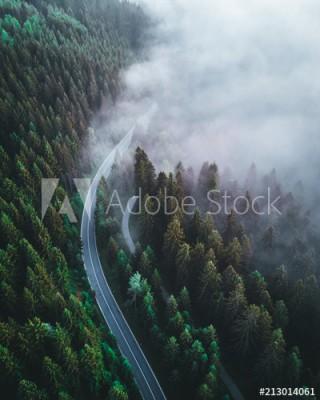 Fototapeta Droga w lesie znikająca we mgle (213014061)