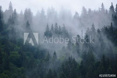 Fototapeta Mglisty krajobraz lasu (215572454)