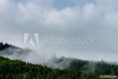 Fototapeta Zamglony krajobraz lasu (215854284)