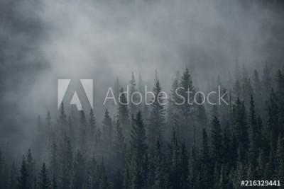 Fototapeta Las pokryty mgłą (216329441)