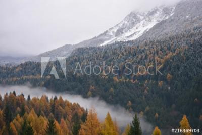 Fototapeta Mgła w dolinie oddziela las (216369703)