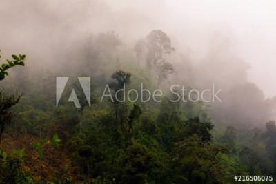 Fototapeta Panorama lasu równikowego pokrytego mgłą (216506075)