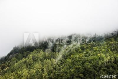 Fototapeta Mgła pokrywająca las (216917267)