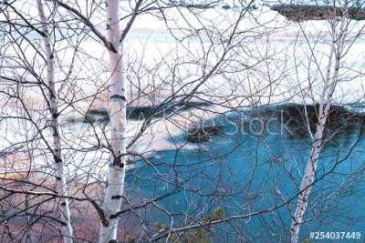 Fototapeta Brzozy na tle wody z topniejącym lodem (254037449)