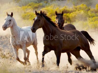 Fototapeta Galopujące konie (2658804)