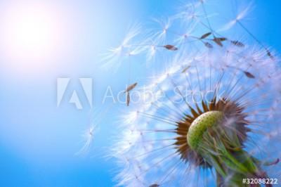 Fototapeta Dmuchawiec na tle błękitnego nieba (32088222)