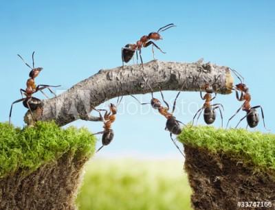 Fototapeta Praca zespołowa mrówek (33747166)