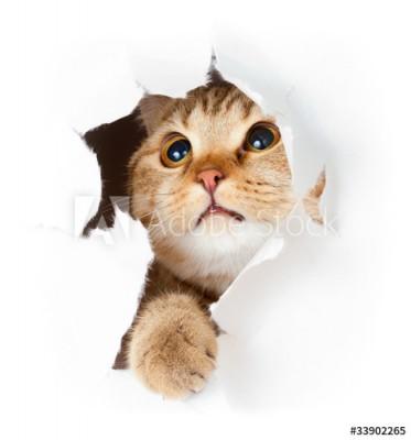 Fototapeta Kot w dziurze z papieru (33902265)