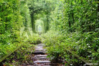Fototapeta Tory kolejowe w głębi lasu (43447140)