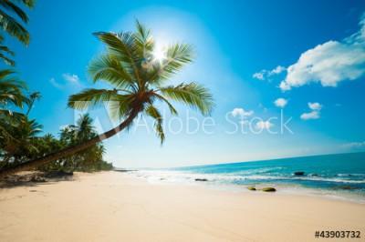 Fototapeta Tropikalna plaża (43903732)