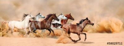 Fototapeta Stado koni w burzy piaskowej (58029711)