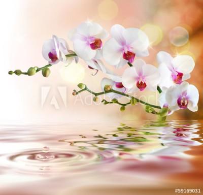 Fototapeta Białe storczyki nad wodą ( 59169031)