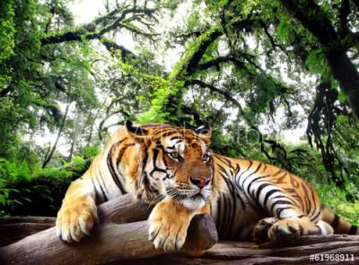 Fototapeta Tygrys na skale w tropikalnym wiecznie zielonym lesie (61968911)