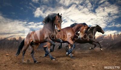 Fototapeta Dzikie konie (62921770)