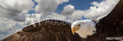 Fototapeta Lecący orzeł wśród chmur (88274883)