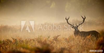 Fototapeta Jeleń we mgle (89363169)