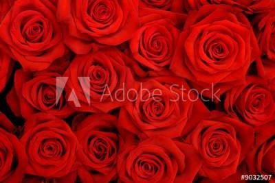 Fototapeta Duży bukiet czerwonych róż (9032507)