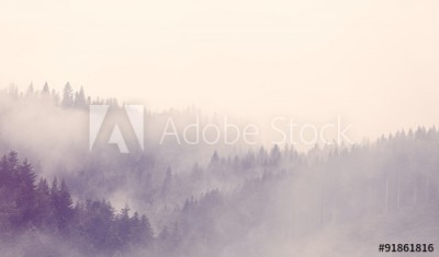 Fototapeta Mgła w lesie (91861816)