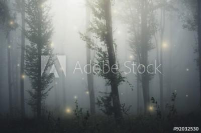 Fototapeta Bajkowy las pokryty mgłą (92032530)