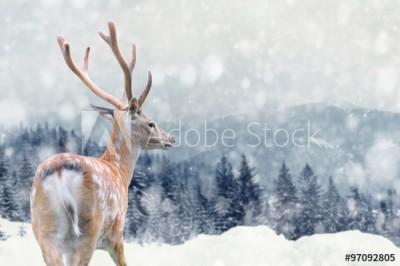 Fototapeta Jeleń na zimowym krajobrazie (97092805)
