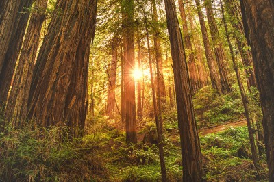 Plakat Zachód słońca w lesie