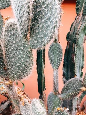 Plakat Kaktusy na pomarańczowym tle